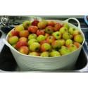 Mermelada ecológica de manzana y azúcar moreno Conservas Contigo