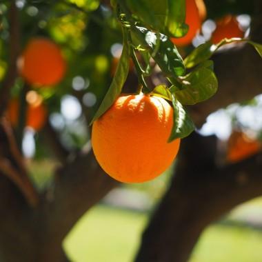 Mermelada ecológica de Naranja amarga Conservas Contigo
